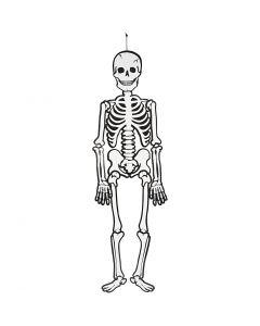 Esqueleto, A: 120 cm, 300 gr, blanco, 1 ud