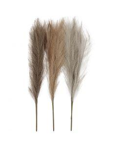 Pasto Pampas, L. 50 cm, polvo claro, marrón claro, gris claro, 3 ud/ 1 fajo