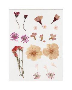 Flores prensadas, rosa claro, 1 paquete