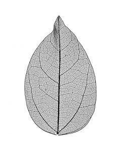 Esqueleto de hojas, L. 6-8 cm, negro, 20 ud/ 1 paquete