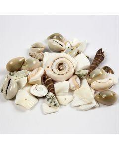 Conchas marinas, medidas 9-40 mm, medida agujero 1-1,5 mm, 120 gr/ 1 paquete