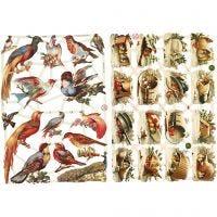 Cromos Vintage, pájaros, 16,5x23,5 cm, 2 hoja/ 1 paquete