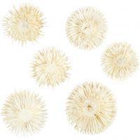 Cabezas de flores secas, dia: 3-5 cm, 6 ud/ 1 paquete