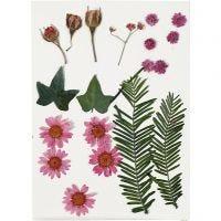 Flores y hojas prensadas, rojo claro, 19 stdas/ 1 paquete
