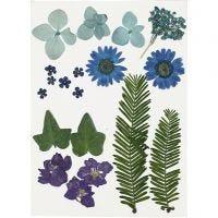 Flores y hojas prensadas, azul, 19 stdas/ 1 paquete