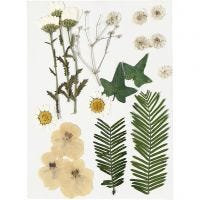 Flores y hojas prensadas, blanquecino, 19 stdas/ 1 paquete