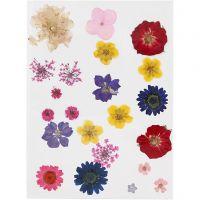 Flores prensadas, surtido de colores, 1 paquete