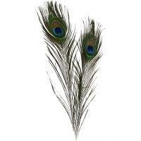 Pluma de pavo real, L. 25-30 cm, 10 ud/ 1 paquete