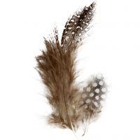 Plumas de gallina de guinea, marrón, 3 gr/ 1 paquete