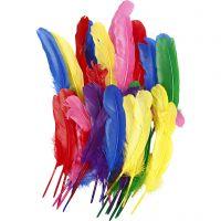 Plumas, L. 20 cm, surtido de colores, 36 ud/ 1 paquete