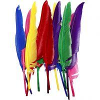 Plumas, L. 27 cm, surtido de colores, 12 ud/ 1 paquete