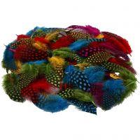 Plumas de gallina de guinea, surtido de colores, 50 gr/ 1 paquete