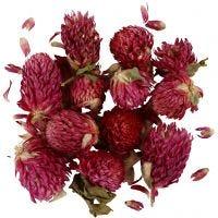 Flores secas, Trébol rojo, L. 1,5-2,5 cm, dia: 1 - 1,5 cm, morado, 1 paquete